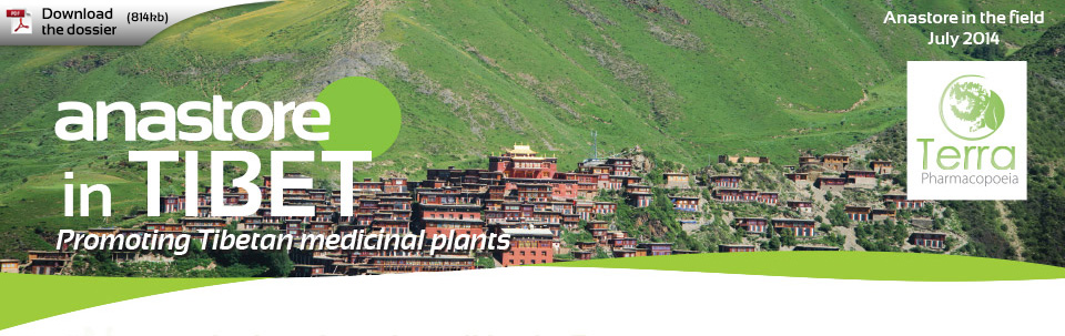 Anastore in Tibet - Promoting Tibetan medicinal plants